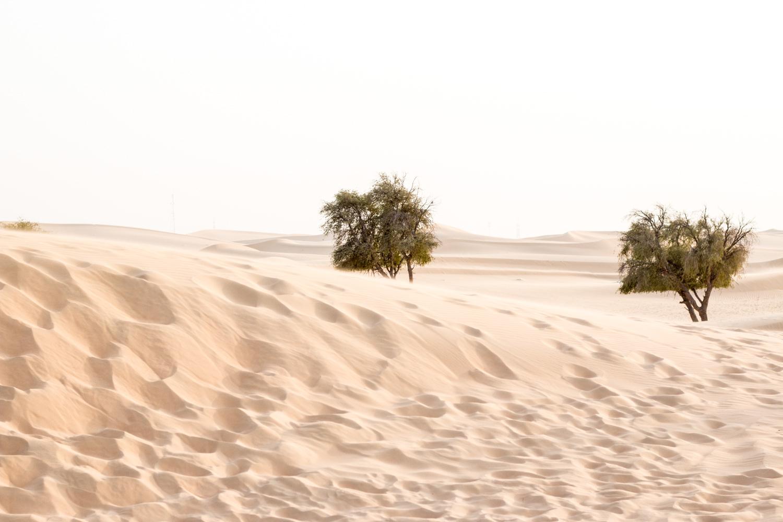 Abu-Dhabi-Memories-36