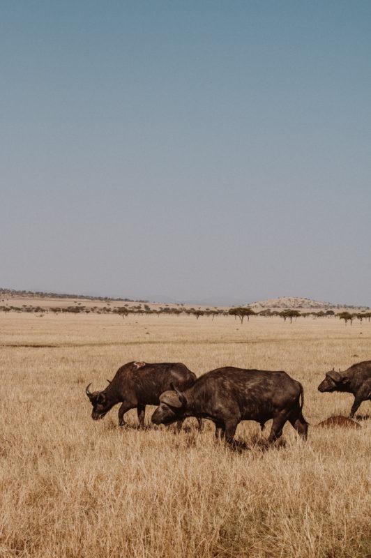 Safari als Hochzeitsreise: Planung und Vorbereitung